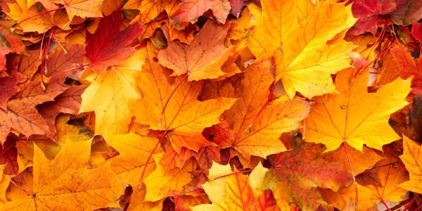 autumn leaves new_0. murafloor.comjpg